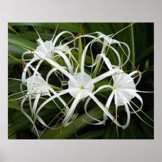 Lis blanc d'araignée floral poster