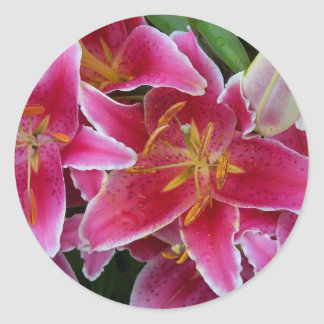 Lis roses avec des autocollants de gouttelettes