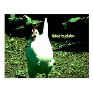 Listen to the Chicken Postcard