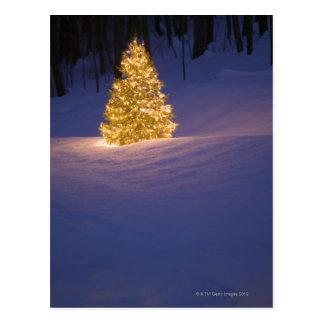 Lit Christmas tree outside Postcard