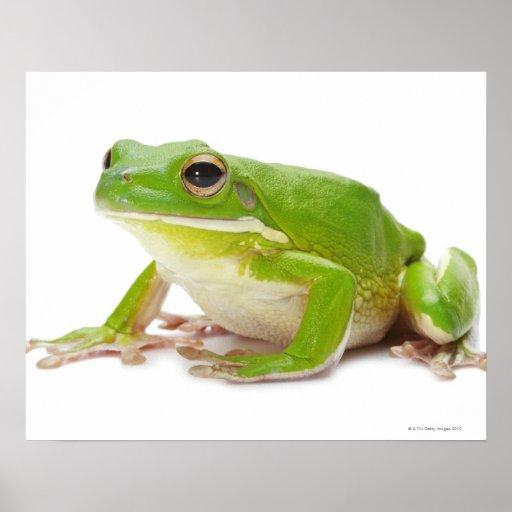 Litora Infrafrenata, Frog Print