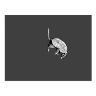 little armadillo postcard