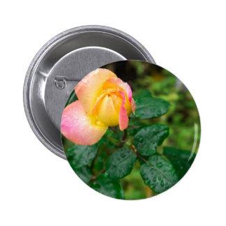 Little autumn rose with blur 2 inch round button