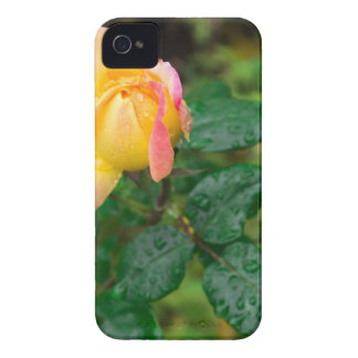 Little autumn rose with blur Case-Mate iPhone 4 cases