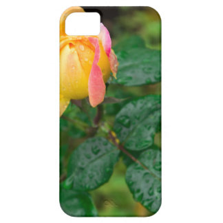 Little autumn rose with blur iPhone 5 case