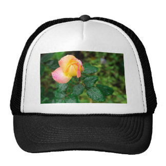 Little autumn rose with blur trucker hat