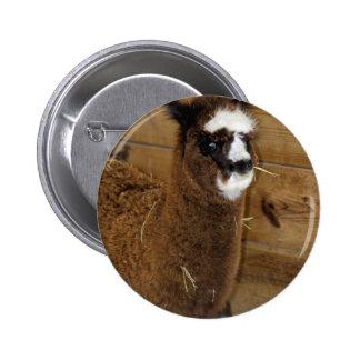 Little Baby Alpaca - Vicugna pacos Pins