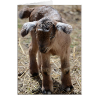 Little Baby Goat Card