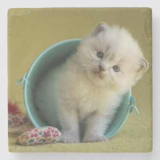 Little ball of fur stone coaster