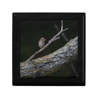 Little Bird Gift Box