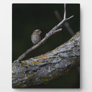 Little Bird Plaque