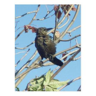 Little Birdie in a Tree Post Card