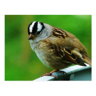 Little Birdie Wild Bird Photo Postcard