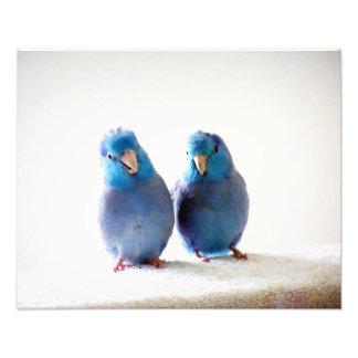 Little Birds Best Friends photo Pacific Parrotlets