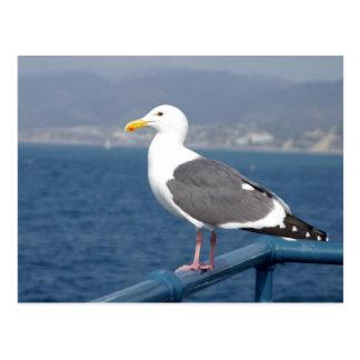 Little Birdy Postcard