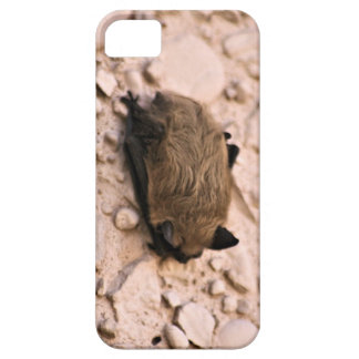 Little Brown Bat iPhone 5 Cases