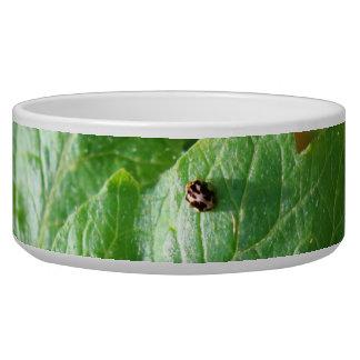 Little Bug Pet Bowl