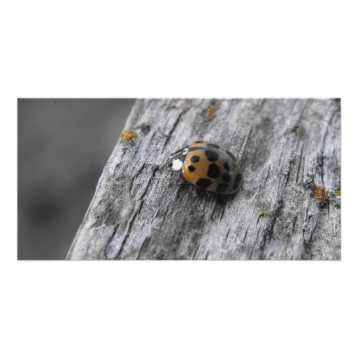 Little Bug Personalized Photo Card