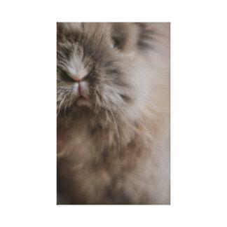 Little Bunny - Pancake Canvas Print
