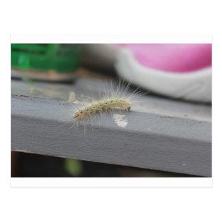 Little Caterpillar Postcard