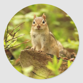 Little Chipmunk on the Lookout Classic Round Sticker