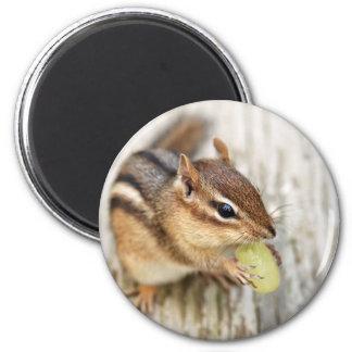 Little Chipmunk with Grape 2 Inch Round Magnet