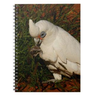 Little Corella Notebooks