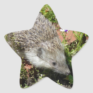 little cute visit in the garden star sticker