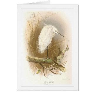 Little Egret Card