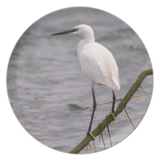 Little egret perched dinner plates