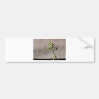 Little Flower Buds Bumper Sticker