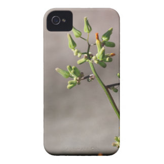 Little Flower Buds iPhone 4 Cover