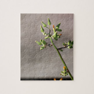 Little Flower Buds Puzzle