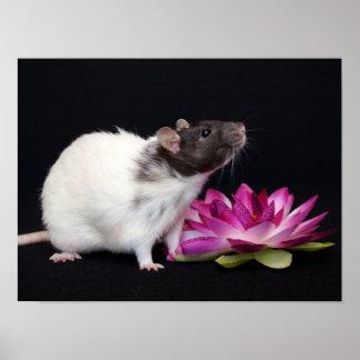 Little Flower - Rat Poster