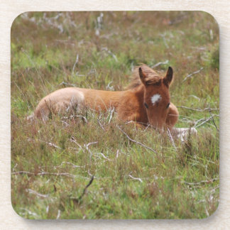Little Foal Coaster