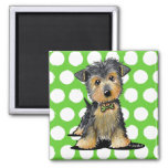 Little Gent Yorkie Square Magnet