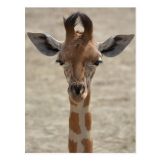 Little giraffe postcard