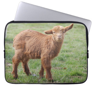Little goat - small nanny goat/photo GLINEUR Laptop Sleeve