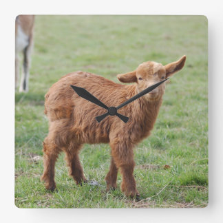 Little goat young goat photo Jean Louis Glineur Square Wall Clock