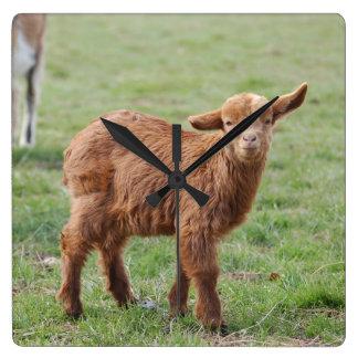 Little goat young goat photo Jean Louis Glineur Wall Clocks