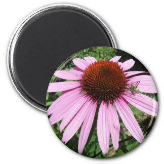 Little Grasshopper on a Purple Flower Magnet