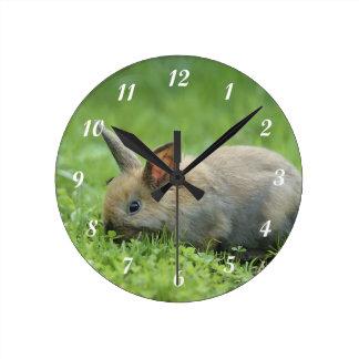 Little Gray Bunny Clocks