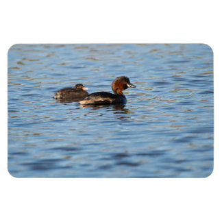 Little Grebe and Chick Rectangular Photo Magnet