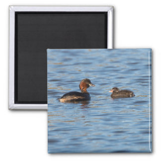 Little Grebe and Chick Square Magnet