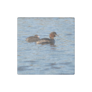 Little Grebe and Chick Stone Magnets