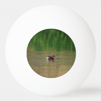 Little grebe duck in breeding plumage ping pong ball