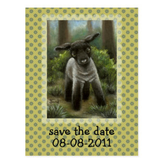 Little lamb in the woods post card
