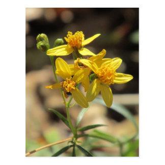 Little Lemon Head Wildflowers Postcard