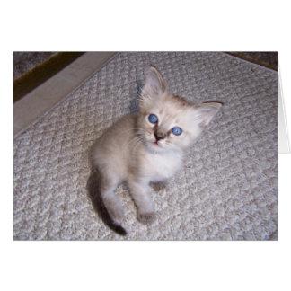 Little Louie Kitten Cat Card