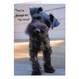 Little Miniature Schnauzer Puppy Greeting Card